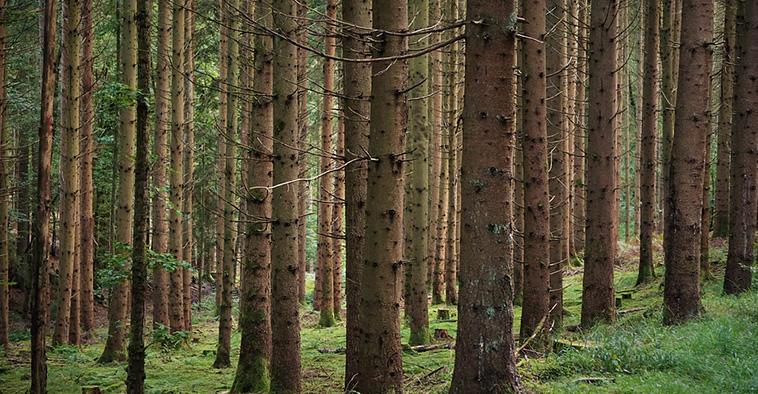 door de bomen het bos